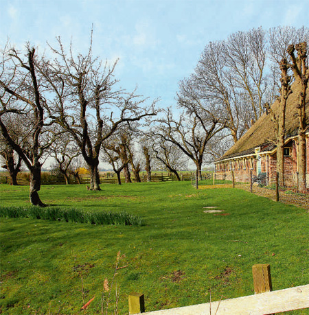 fruitbomen friesland